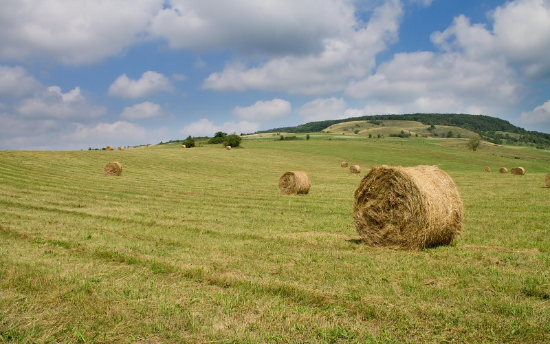 hay-bales-on-the-field-images-71891